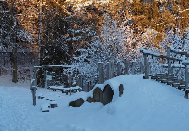 Die Abendsonne leuchtet in die Bäume, die Landschaft ist schneebedeckt