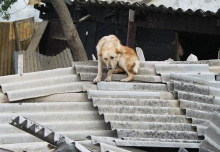 A dog seeks shelter on top of a pile of rubble during the Serbian floods