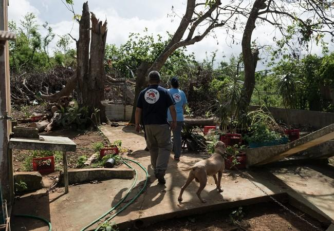 Homes were wreaked, many animals were left for days without food or water