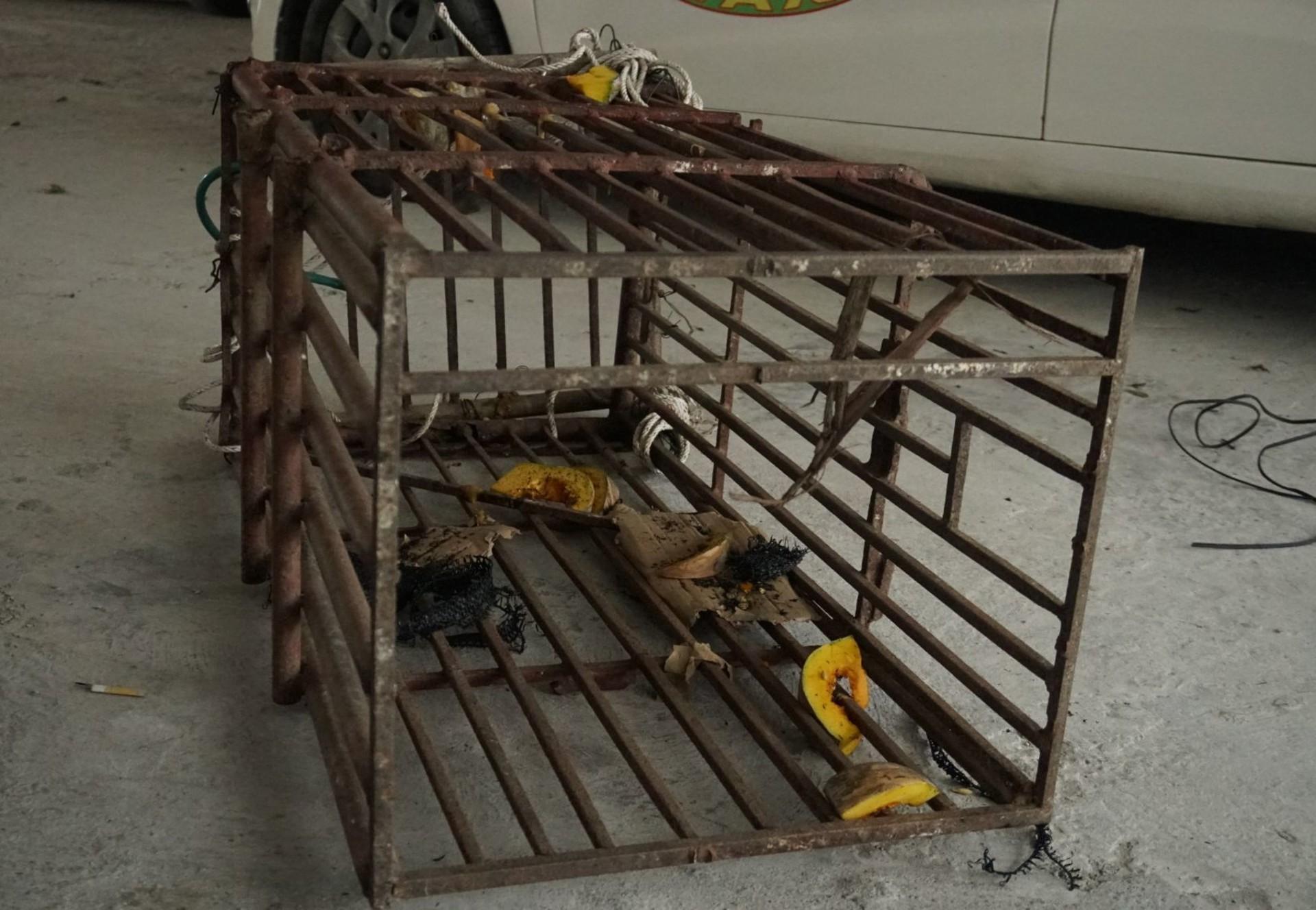 Der leere, winzige Käfig aus dem der Bär gerettet wurde