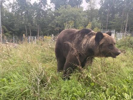 Bear Martha
