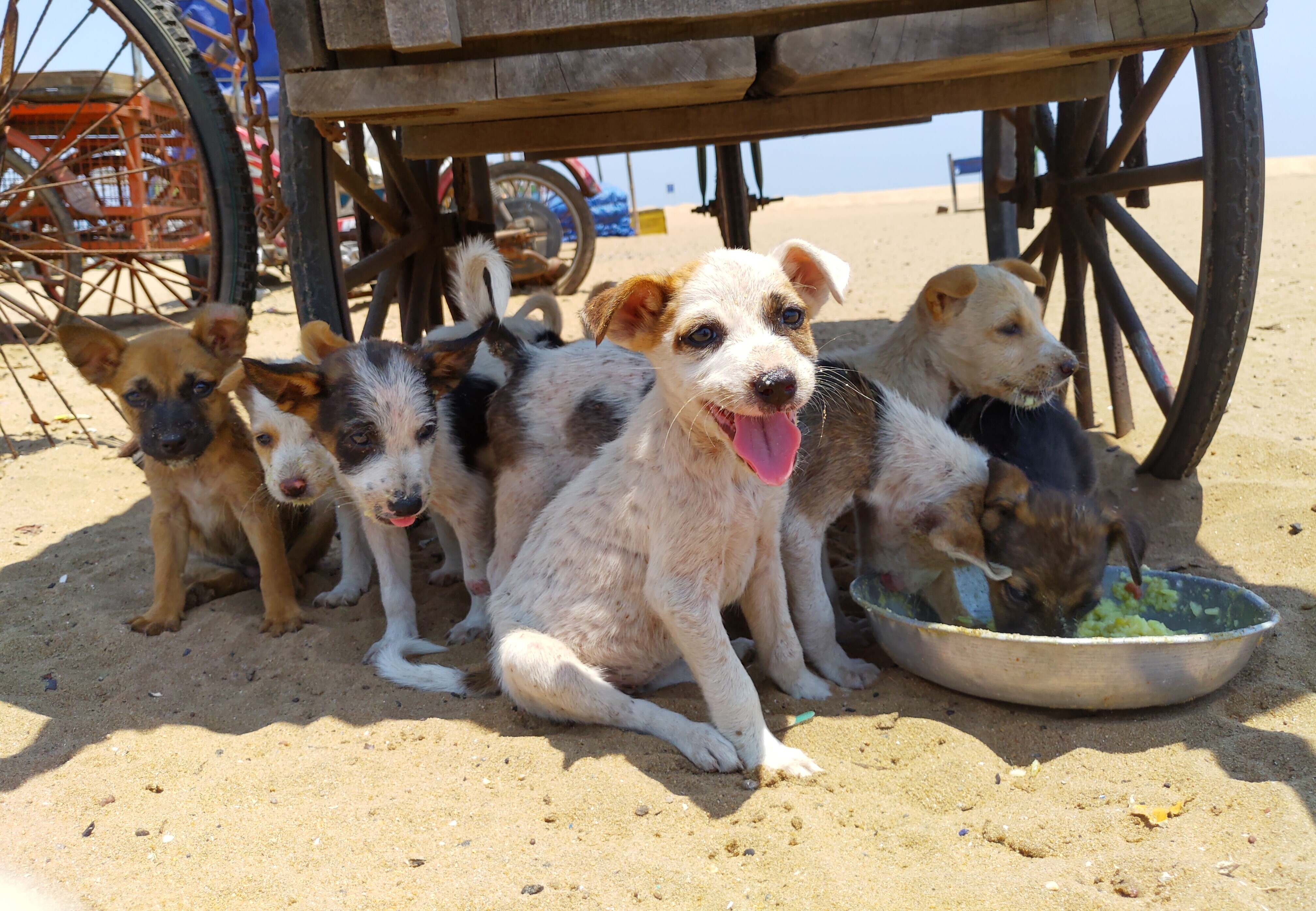 litter of stray dogs