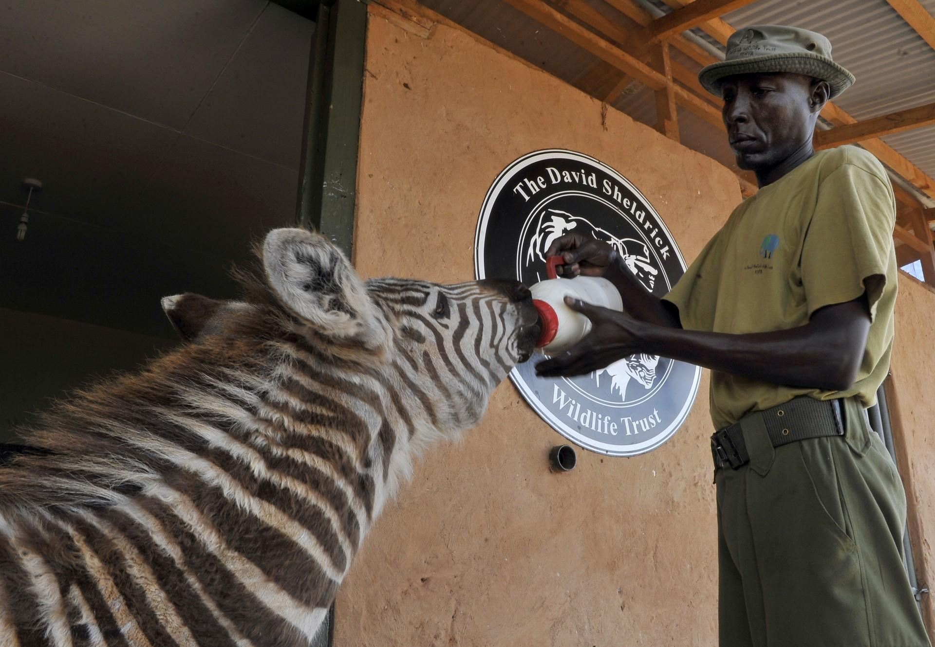 Helping elephants and zebras