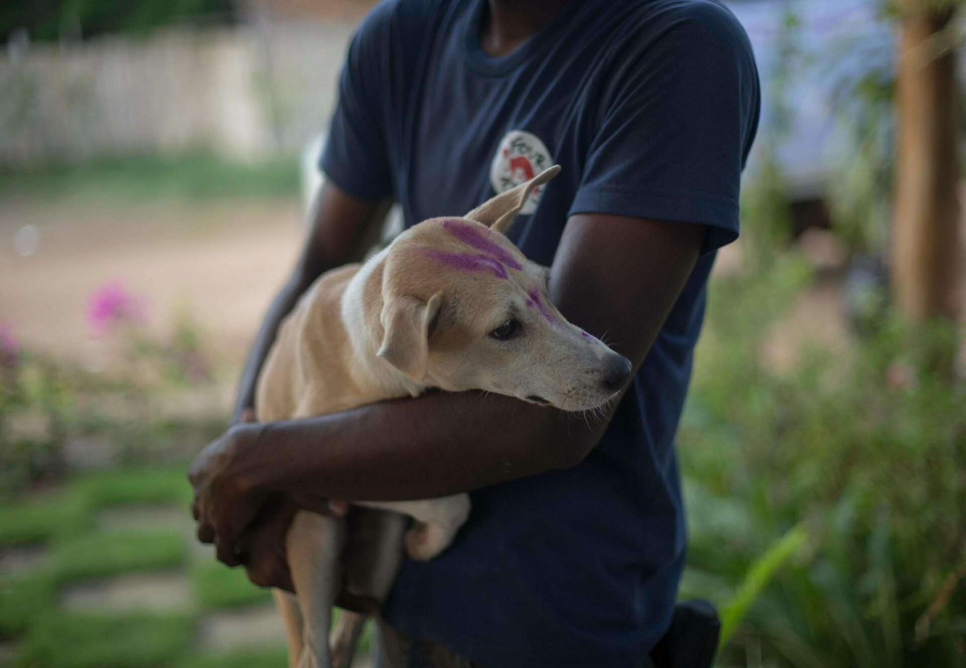 Over 50,000 animals have been vaccinated against rabies