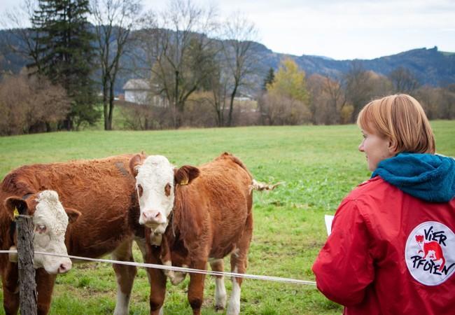 Die Haltung der Rinder wird genau kontrolliert