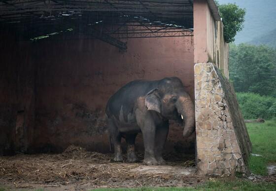 Elephant Kaavan at Marghazar Zoo in Islamabad, Pakistan