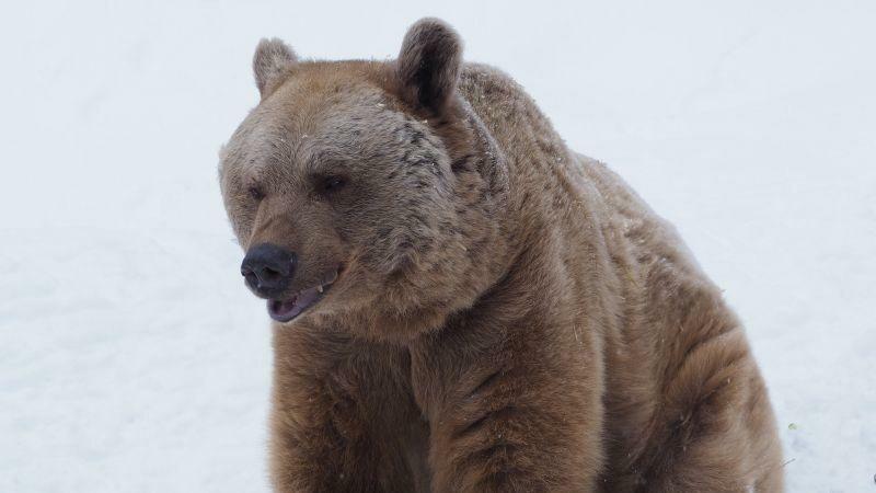 Bär Vinzenz schaut noch ein bisschen verschlafen aus. (c) VIER PFOTEN