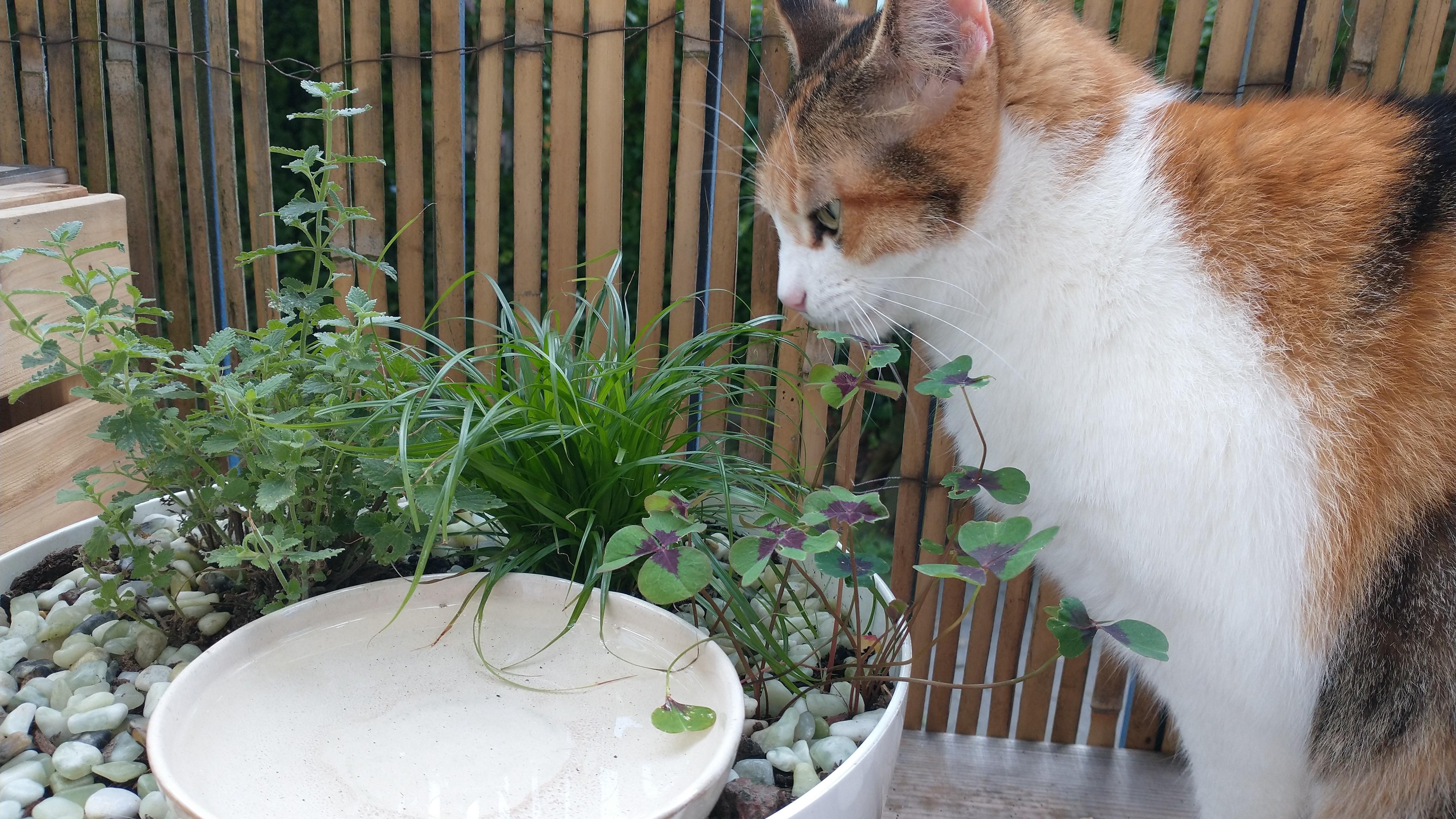 Cat on balcony with decorative cat drinking garden.