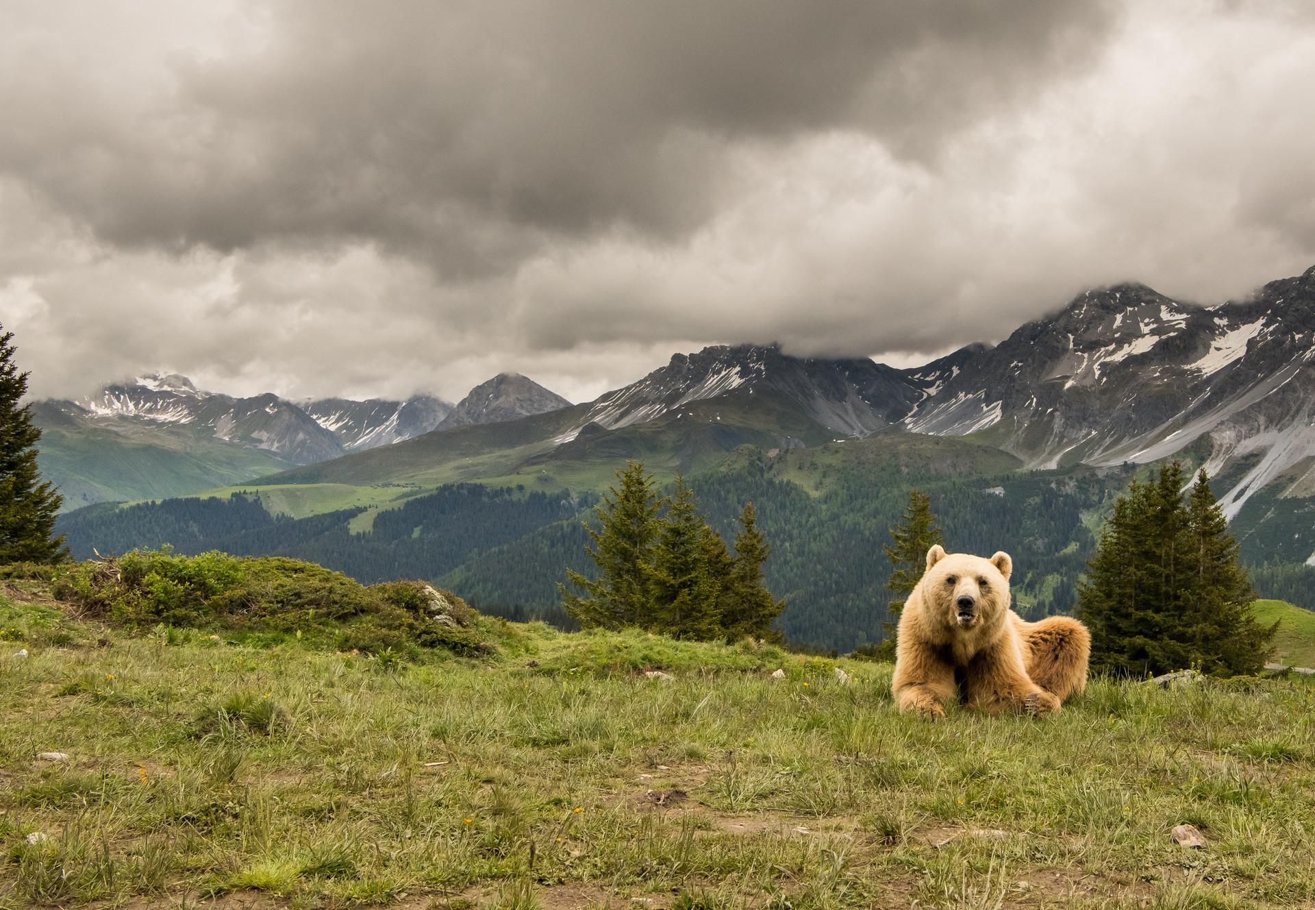 Bear Napa in the outdoor enclosure