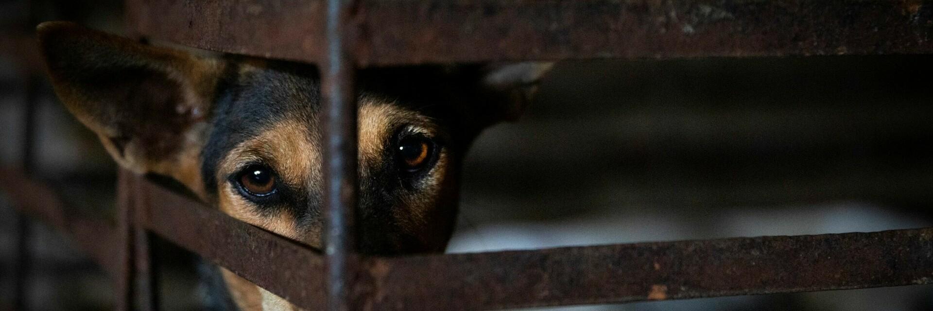 Ein Hund im Käfig