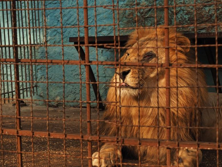 Safari Park Zoo Fier