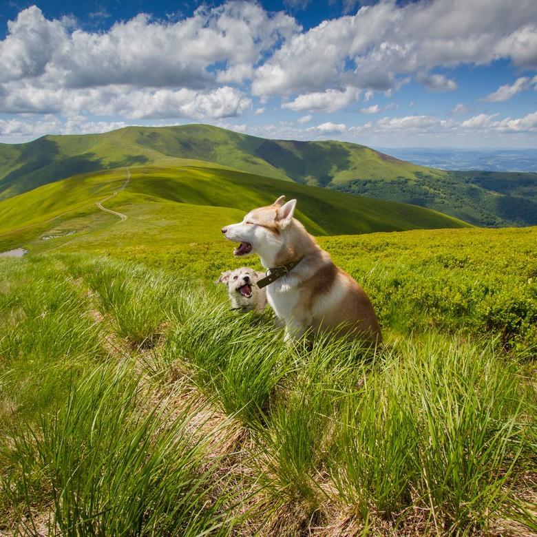 Hunde beim Wandern