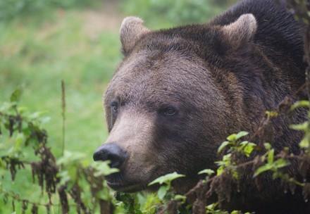 bear Erich