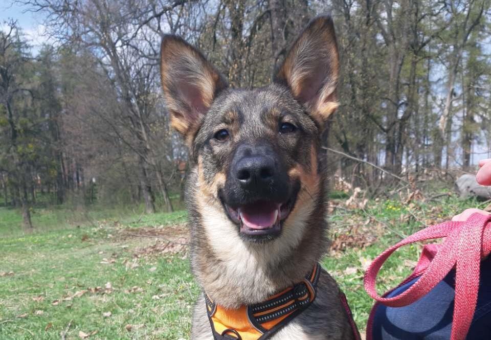 Therapiehond Busia