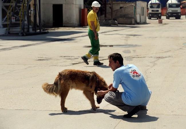 Streunerhilfe Rumänien