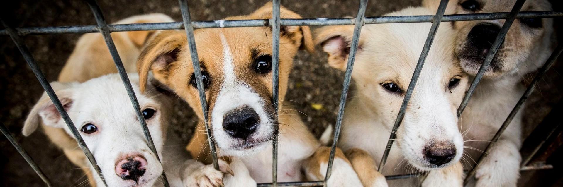 Hundewelpen im Tierheim