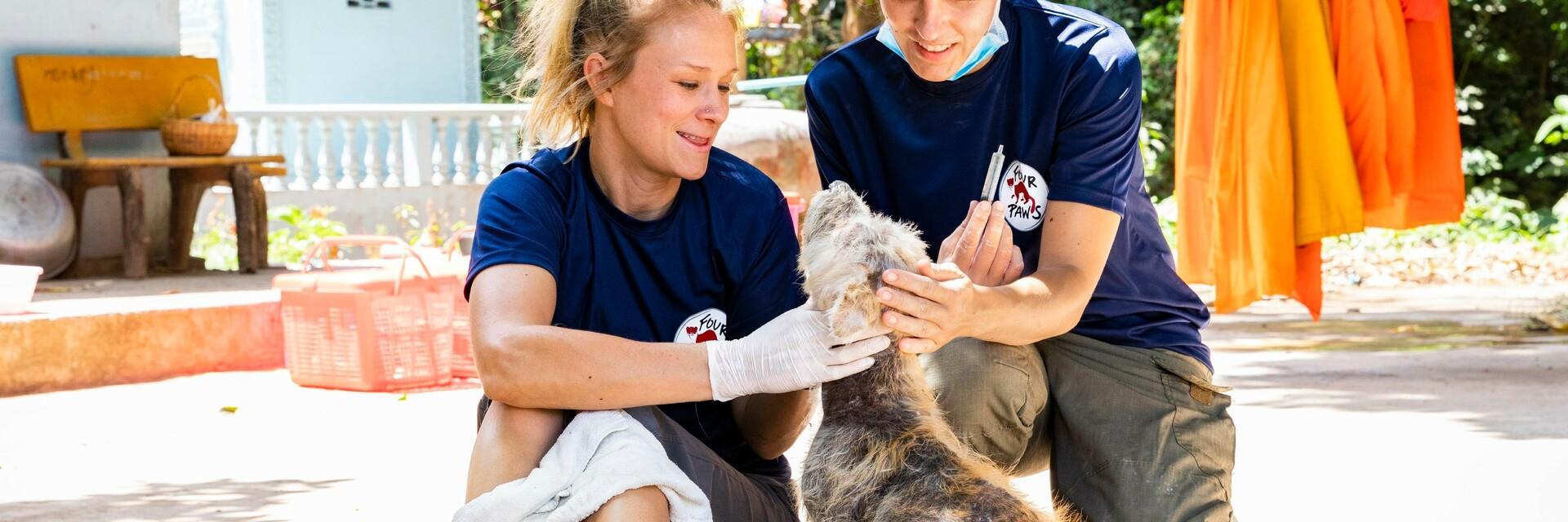 Stray animal care in Cambodia
