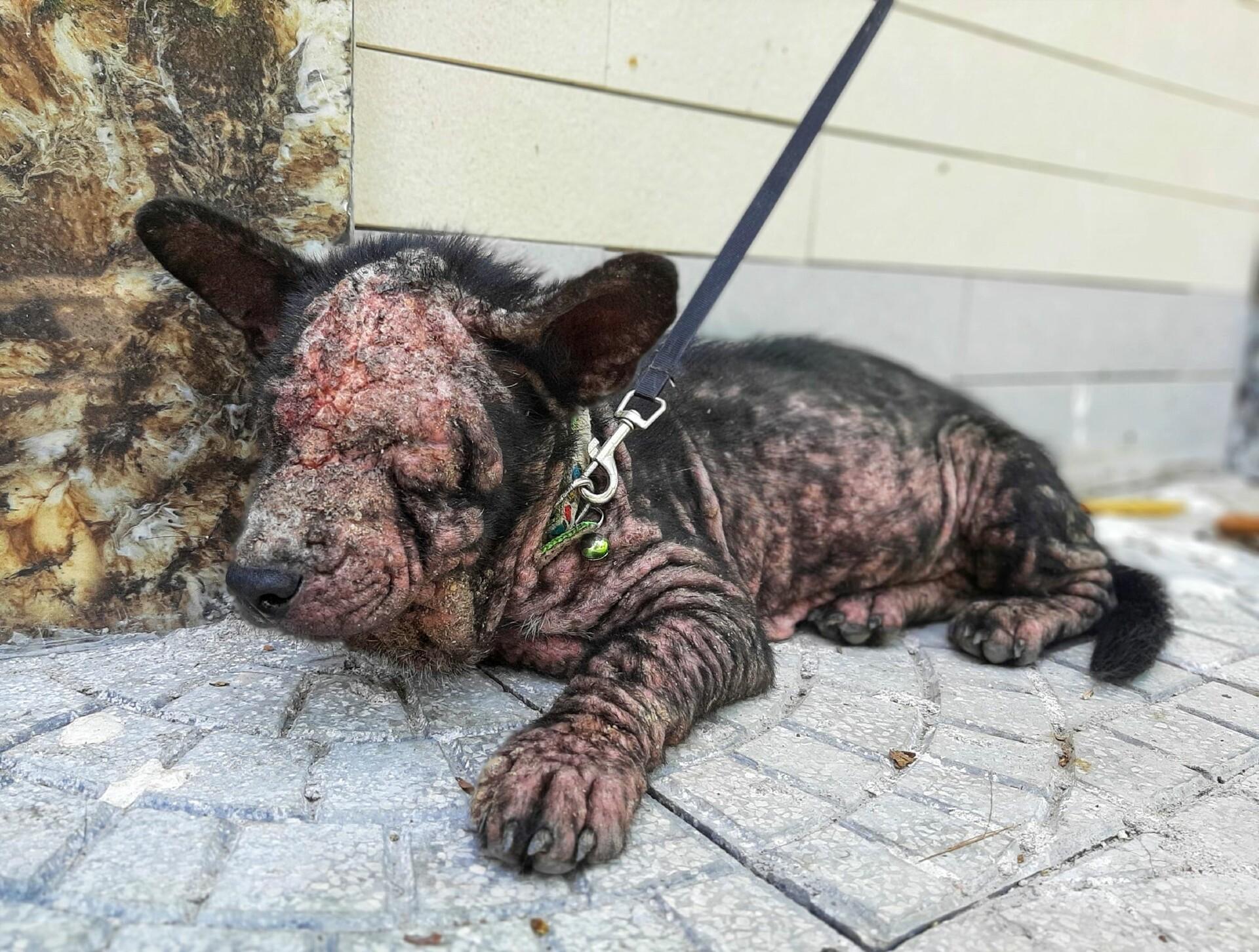 Hund Moo als er gefunden wurde