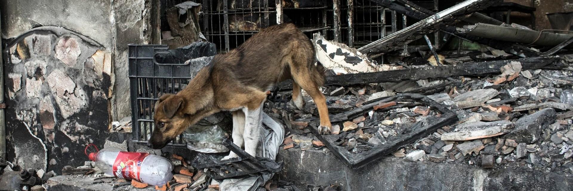 Stray dog in Bulgaria