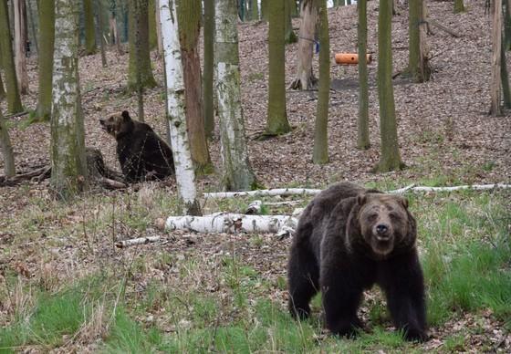 Gerettete Bären Ewka & Gienia