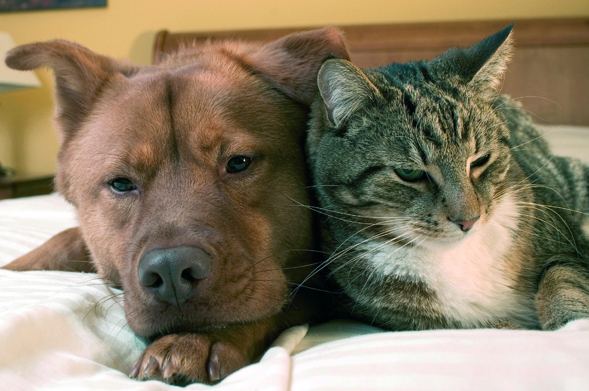 Hund und Katze beim Entspannen