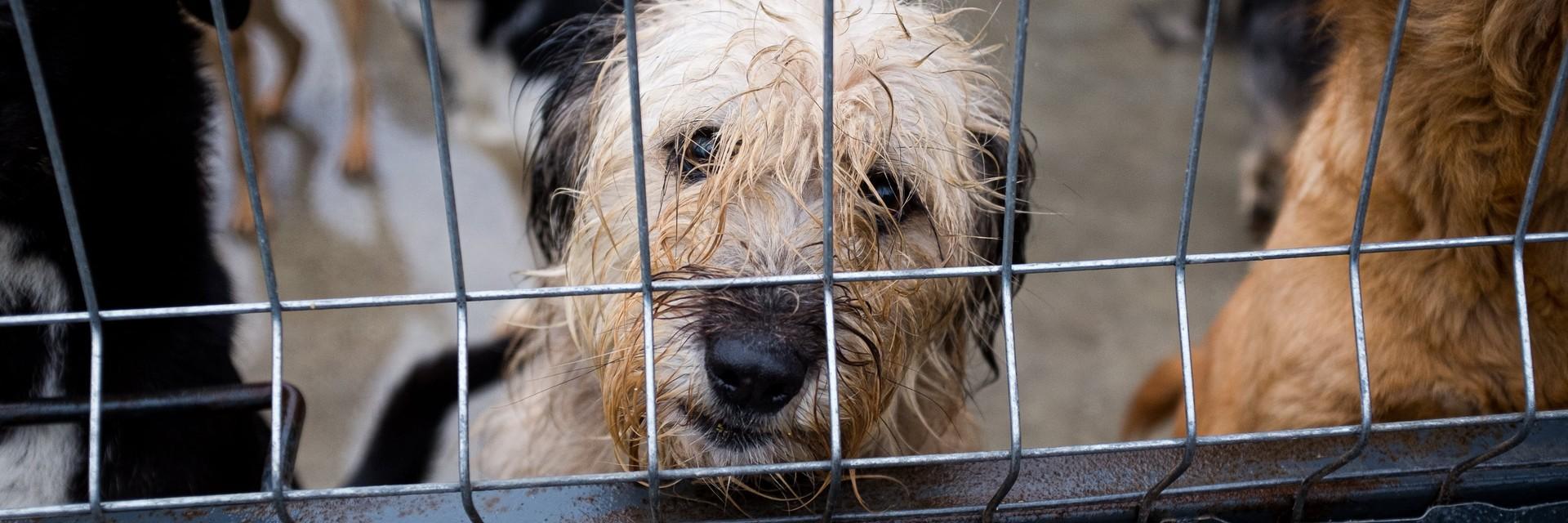 Straßenhund in Moldawien
