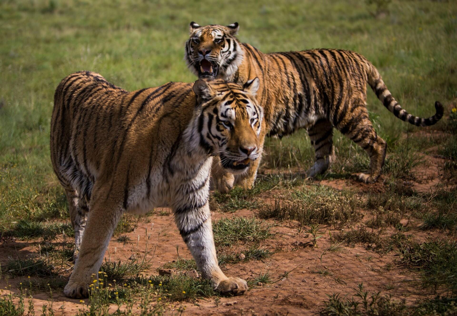 Drieling Rafik, Mirza & Zita in LIONSROCK
