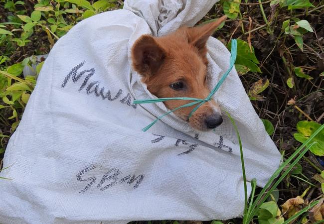Dog meat dog in bag