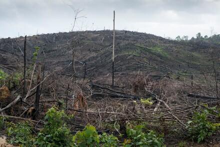 Von Feuer zerstörter Wald in Borneo, Indonesien