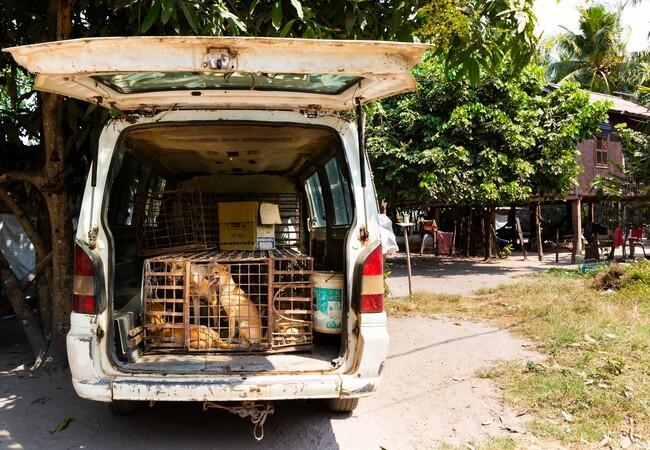 Van with dogs in a cage