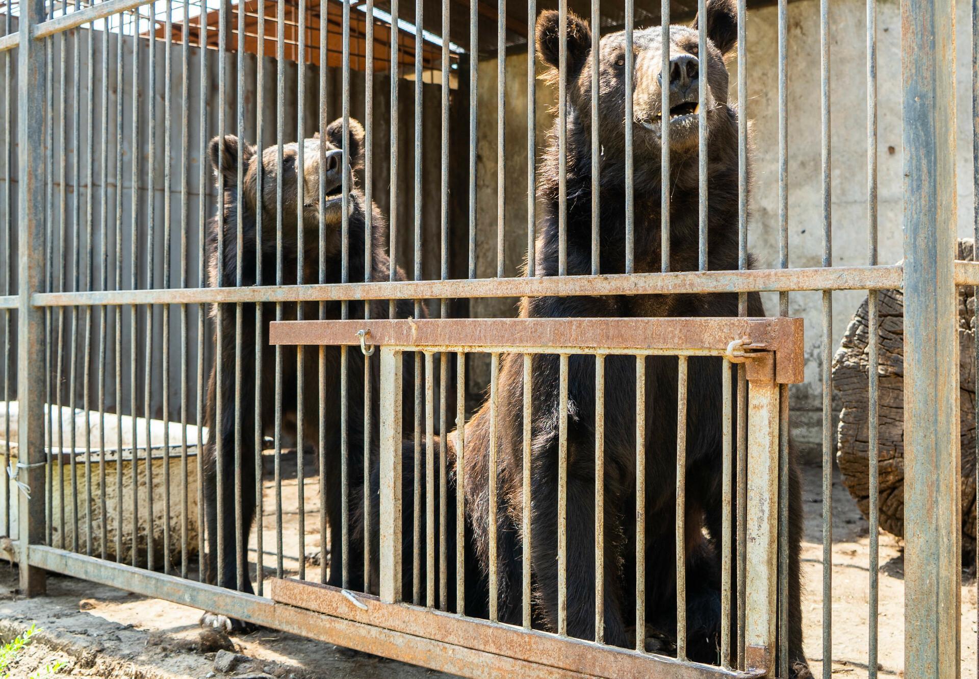 Rettung der Bären Anya und Frankie