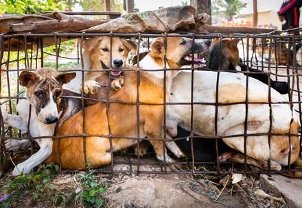 Hund eingepfercht in enge Käfige