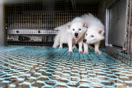 Stop the fur industry!