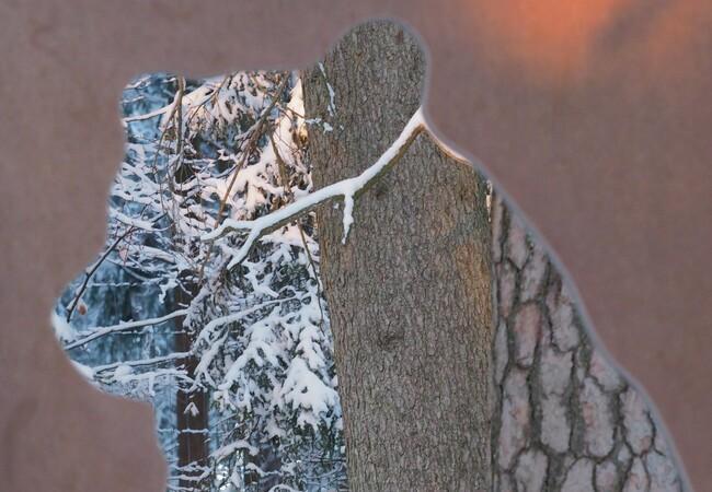 Blick durch eine Bärenshilouette auf winterlichen Wald