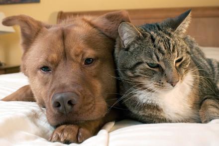 Hund und Katze liegen nebeneinander