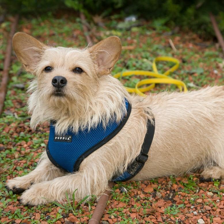 Hund mit Brustgeschirr und Leine