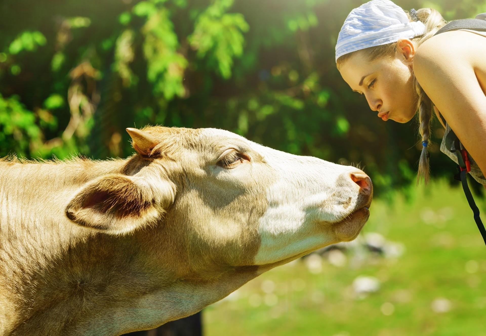 Mädchen und Kuh verstehen sich gut