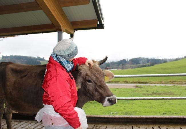 Die Kühe werden regelmäßig untersucht