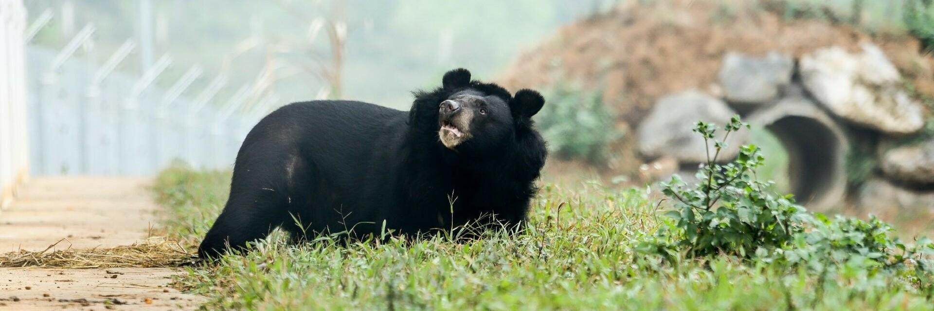 Bear sanctuaries