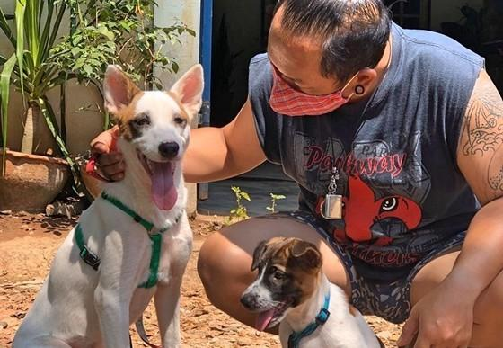 Stray puppies find their forever home in Thailand