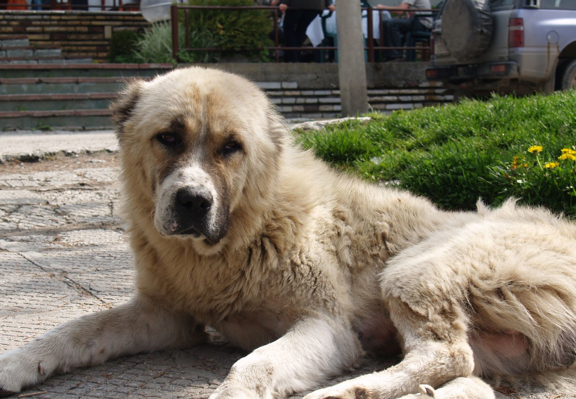 Livre de photographie : « Les chiens errants de Sofia »