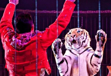 tamer and tiger