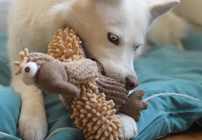 Hündin mit Spielzeug