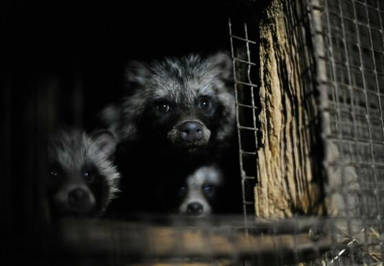 Animal Charity - Fur Farming Image