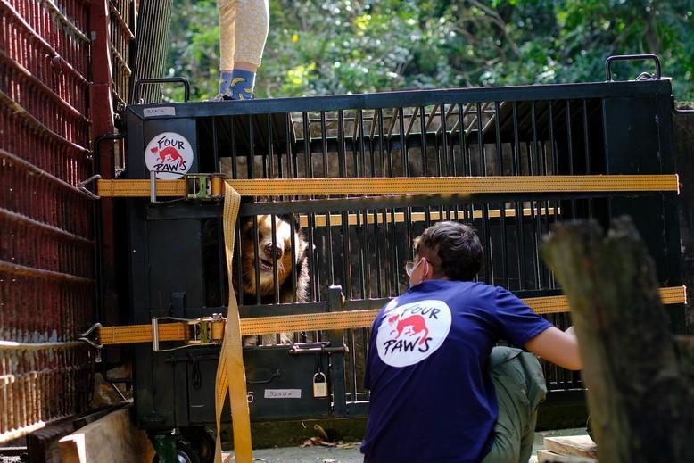 Rettung von sieben Gallebären in Vietnam