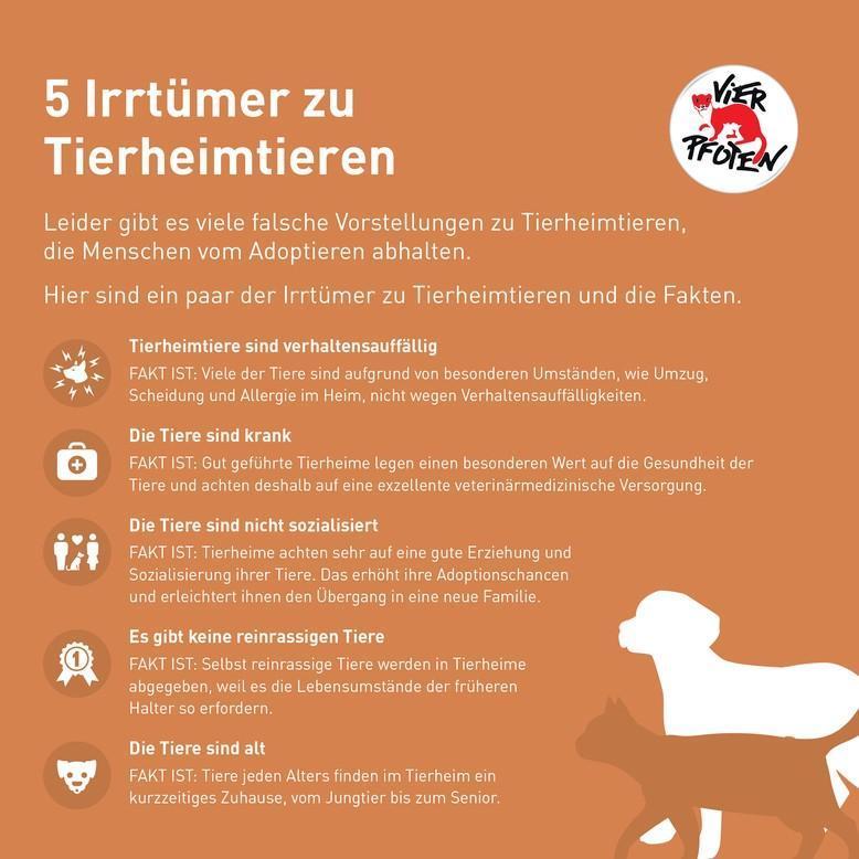 5 Irrtümer zu Tierheimtieren
