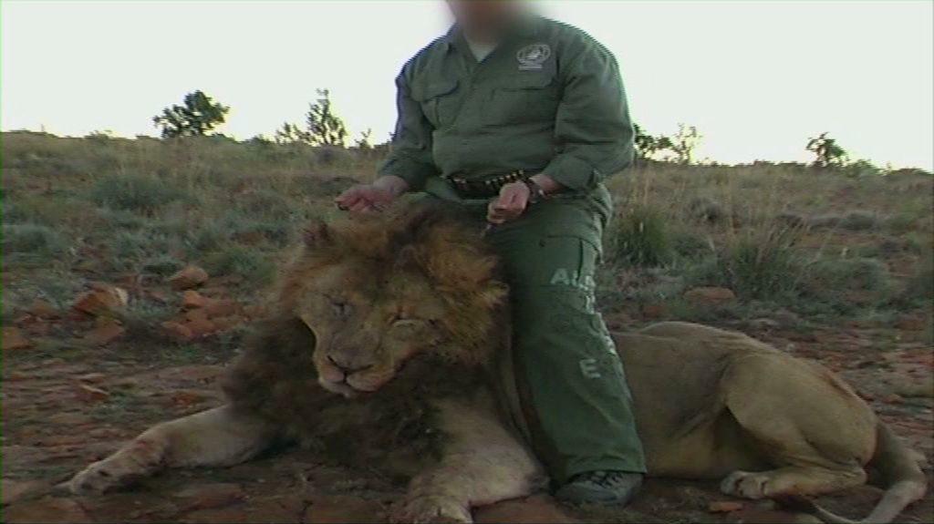 Löwe getötet bei der Gatterjagd