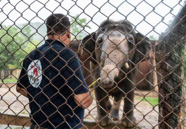 L'équipe dirigée par le Dr Amir Khalil prend soin de l'éléphant