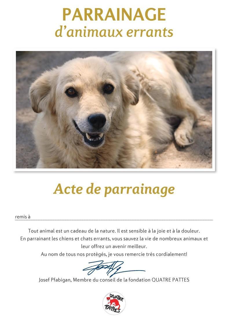 Certificat de parrainage des animaux errants
