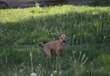 Mon chien a la diarrhée: que faire?